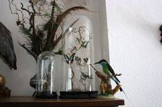 Detail of my collection.  Glass dome, butterflies, bee-eater, humming bird, feathers, taxidermy, interior