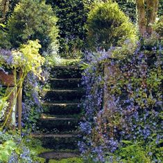 Campanula porscharskyana draped around a staircase.to die for! aesthetic Journal - Garden Design, Montreal, Perennial Flower G