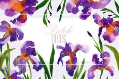 Dutch Iris-Watercolor Clip Art by SmallHouseBigPony on @creativemarket