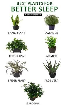 10 Infographics That Will Help You Sleep Better Effortlessly is part of Bedroom plants - Don't miss out the practical guide to better sleep! The 10 infographics will solve your sleep problems in an unexpected way Inside Plants, Cool Plants, Plants That Repel Bugs, Good Plants For Indoors, Vegetables To Grow Indoors, Growing Herbs Indoors, Gardening Vegetables, Small Plants, Growing Plants