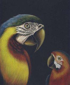 Perroquets / Parrots, 2000