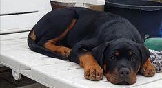Boef my dogchild 16 wk
