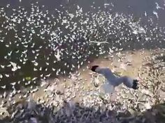 Incredible video  flying  the birds.