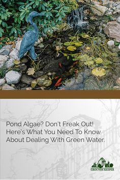 The trick is not to try to rid your pond of algae, but to work with its natural behavior and the environment of your pond to create a balanced ecosystem. These tips can help.
