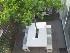 tree in courtyard table
