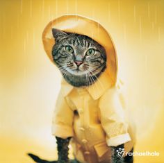 Cougar Raincat (Moggy ) - Even though Cougar loves water he likes to be fully prepared for the worst.
