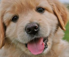 85525a33 Who's a happy dog !?! Baby Animals, Animals And Pets, Cute Animals