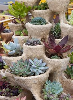 Want to Grow a Succulent Garden? | Find.com #gardening #succulents