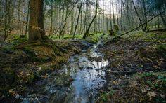 Fairy Tale Forest by Sören Klempert. Diese Foto ist mir im schönen Hessen gelungen. Die Kamera habe ich auf ein Stativ gestellt ansonsten wäre das Foto bestimmt nicht so schön geworden ;)
