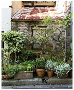 Magic Garden, Dream Garden, Big Garden, Summer Garden, Garden Cottage, Garden Pots, Potted Garden, Balcony Gardening, Outdoor Potted Plants