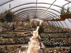 Houston Texas Cactus King Plant Nursery 2012 Folk Art artist Plants Signs   by mrchriscornwell
