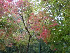 Herbst-Zeit