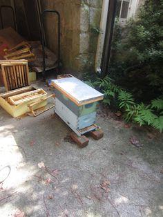 *nice bee blog* Linda's Bees