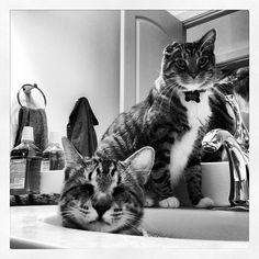 """""""Bathroom Cats"""" Oskar and Klaus"""
