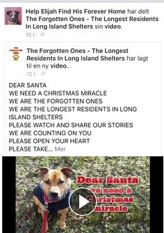 11/29/16 THE LONG ISLAND SHELTERS!! PLEASE SHARE - LET THERE BE MANY MIRACLES BEFORE CHRISTMAS THIS YEAR❤️ LET THEY ALL HAVE THEIR LOVING FOREVER HOMES TO CELEBRATE IN❤️ THANK YOU❤️❤️ /ij https://m.facebook.com/story.php?story_fbid=705897419565428&id=580937175394787&__tn__=%2As