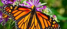 Everything You Need to Know About The Ridges Sanctuary - Ashbrooke Hotel Hope Symbol, Butterfly Pictures, Birth Month, Monarch Butterfly, Everything, Image, Beautiful, Door County, Chakra