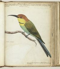 Journal with birds scientific illustration. Dutch East Indies, Still Picture, Bee Eater, Small Birds, Stock Foto, Bird Art, Bird Feathers, In A Heartbeat, Creatures