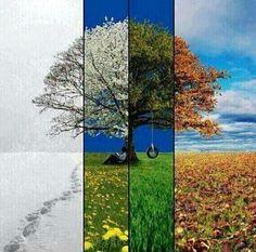 Un año en una imagen: las 4 estaciones. pic.twitter.com/TDKmafd0r5