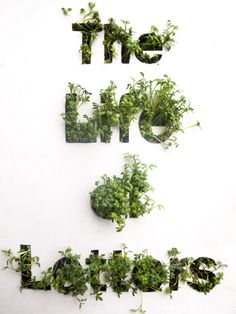 Typography poster. Made by cutting the letters out of cardboard and planting some garden cress seeds underneath it!