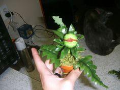 Little shop of horrors audrey2 seedling