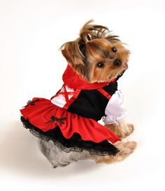 Little Red Hood Dress Dog Costume – Costumes Posh Puppy Boutique - Belezza,animales , salud animal y mas Little Red Riding Hood Halloween, Little Red Hood, Red Riding Hood Costume, Big Dog Costumes, Puppy Costume, Dog Halloween Costumes, Happy Halloween, Princess Dog Costume, Designer Dog Clothes
