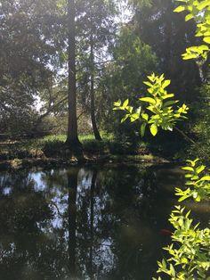 Rancho Santa Ana Botanic Garden - Exploring So Cal Garden devoted to native plants in Claremont CA