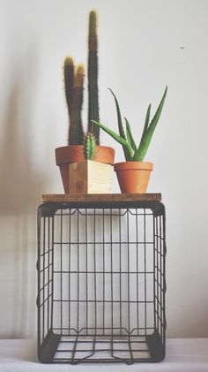 Crates + Cacti