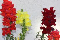 Ikebana, Good To Know, Wisteria, Tudor, Netflix, Random, Life, Casual, Flower Arrangements