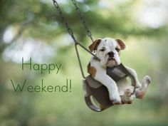 Here are 100 happy weekend quotes and sayings to help you celebrate the weekend. Friday, Saturday and Sunday are the best days to relax and have fun and they make up the weekend.