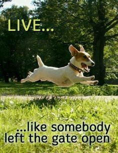 Live like somebody left the gate open- Doreen Virtue #LessonsFromAnimals #dogs