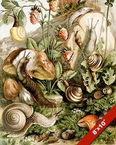 SNAILS & SLUGS EATING IN THE GARDEN PULMONATA CANVAS GICLEE 8X10 ART PRINT #Realism