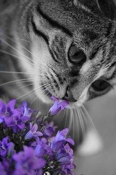 Osservare un gatto è un pò come assistere alla realizzazione di un' opera d'arte.  Oliver Herford *** my little place