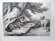 4. Howitt, Samuel 1810 Four original engravings/etchings: Dog, Cock and Fox; Hunted Beaver; The Eagle, & Assembly of Animals; Sheep and Hunted Wolf book