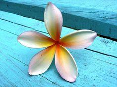 Fav flower