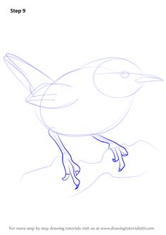 Learn How to Draw a Wren (Birds) Step by Step : Drawing Tutorials Bird Drawings, Pencil Art Drawings, Easy Drawings, Animal Drawings, Watercolor Pencil Art, Watercolor Paintings, Sketches Tutorial, Drawing Tutorials, Simple Bird Drawing