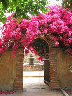 I love Bougainvillea. If I lived in the tropics my garden would be full of Bougainvillea Garden Gates, Garden Entrance, Garden Archway, House Entrance, Grand Entrance, Dream Garden, Garden Inspiration, Garden Ideas, Style Inspiration
