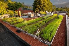 Living roof from Recover Green Roofs  http://www.facebook.com/pages/Recover-Green-Roofs-LLC/119485401413074