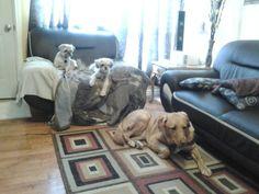 Maya, Molly and Bella Maya, Dogs, Animals, Animales, Animaux, Pet Dogs, Doggies, Maya Civilization, Animal