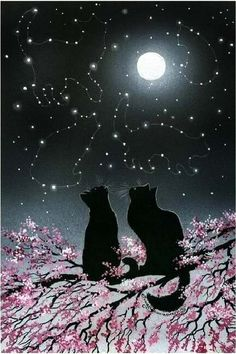 I love love love this!   Black Cats looking up at Cat Constellations ~♥~