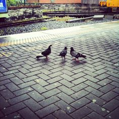 #Pigeons r train-hoppers. By www.crypticvisionphotography.com Pigeon, Sidewalk, Louvre, Train, Building, Instagram, Side Walkway, Buildings, Walkway