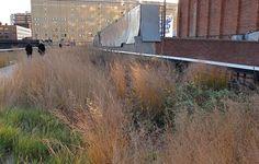 High Line Garden by Piet Oudolf #gardening