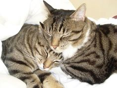 I've said it before and I'll say it again....there's nothing more precious than kitty love. <3