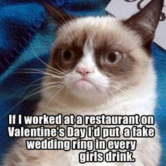 Grumpy Cat Quotes, Funny Grumpy Cat Memes, Cat Jokes, Funny Animal Memes, Cute Funny Animals, Funny Cats, Funny Jokes, Grumpy Kitty, Memes Humor