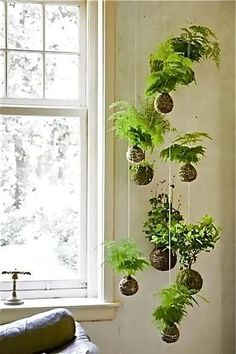 Hanging ferns - how cool would this be hanging from trees outside?