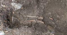 Um esqueleto de mil anos foi descoberto entre as raízes de uma árvore na cidade irlandesa de Collooney, após uma forte tempestade derrubar a planta, que tinha 200 anos. Os restos mortais são de um homem entre 17 e 25 anos e marcas no esqueleto sugerem que ele morreu após ser golpeado por uma lâmina afiada. Análises de radio carbono indicam que a morte aconteceu entre 1030 e 1200 d.C.