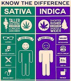 Marihuana Medicinal, Cannabis Strains, Medical Marijane, Cannabis terapéutico