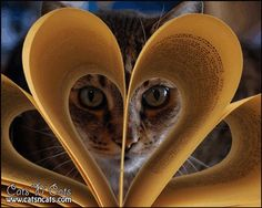 Cats 'n' Cats – All About Cats And Kittens - Click for More...