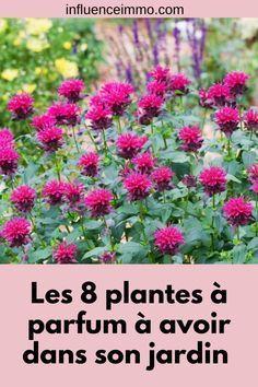 Outdoor Planters, Outdoor Gardens, Indoor Outdoor, Growing Flowers, Planting Flowers, Flower Gardening, Veg Garden, Balcony Garden, Terrarium Plants