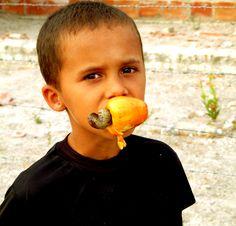 http://saitica.blogspot.com.br/2011/03/cajueiros-do-brasil-rio-real-bahia-da.html