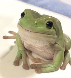 Frog Discover The Happy Cottage Baby Animals, Funny Animals, Cute Animals, Wild Animals, Animals Beautiful, Whites Tree Frog, Pet Frogs, Frog Pictures, Frog Art